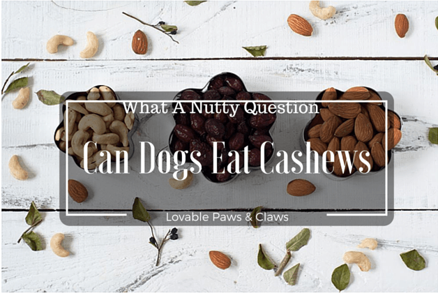 Can Dogs Eat Cashews: What A Nutty Question