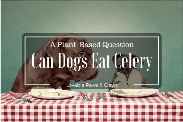Can Dogs Eat Celery, A Plant-Based Question