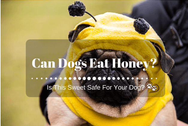 Can Dogs Eat Honey? Is This Sweet Safe For Your Dog?