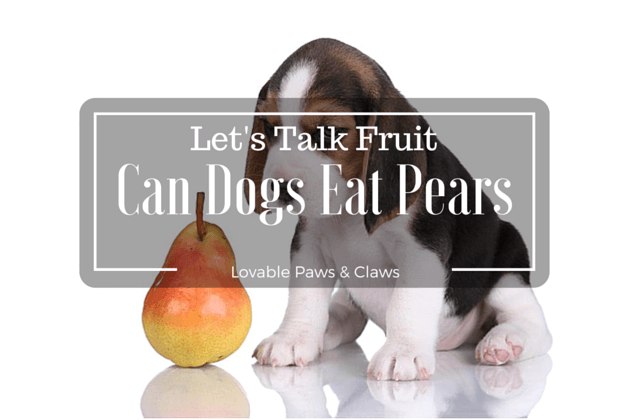 Can Dogs Eat Pears: Let's Talk Fruit