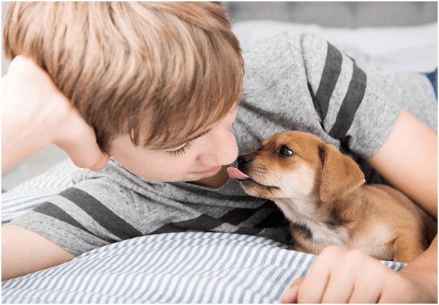 why do dogs lick your face