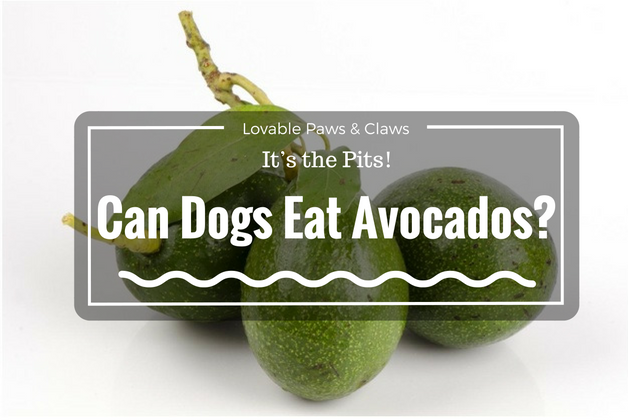 Can Dogs Eat Avocados? It's the Pits!