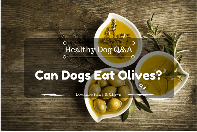 Healthy Dog Q&A Can Dogs Eat Olives?