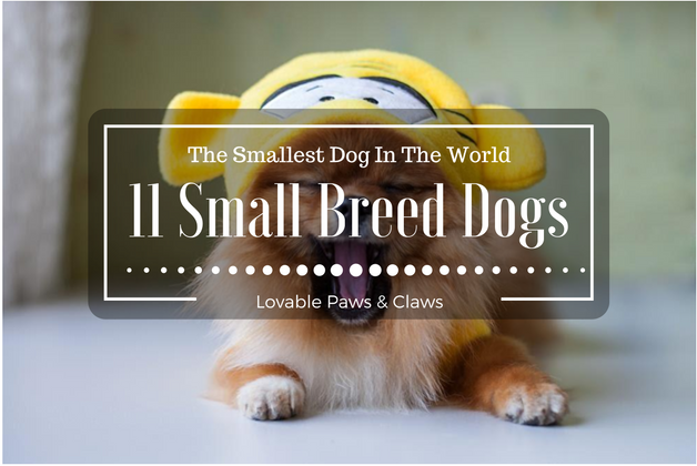The Smallest Dog In The World: 11 Small Breed Dogs