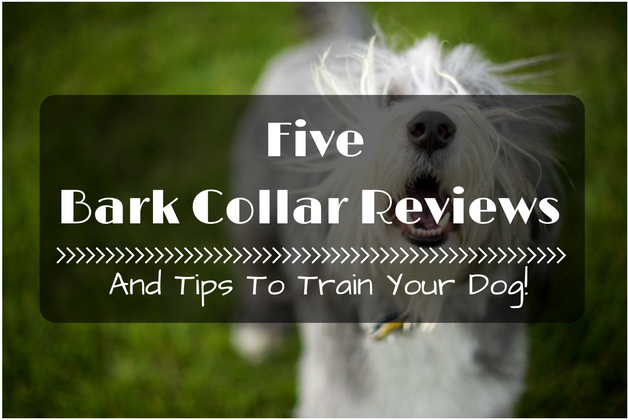 5 Bark Collar Reviews And Tips To Train Your Dog!