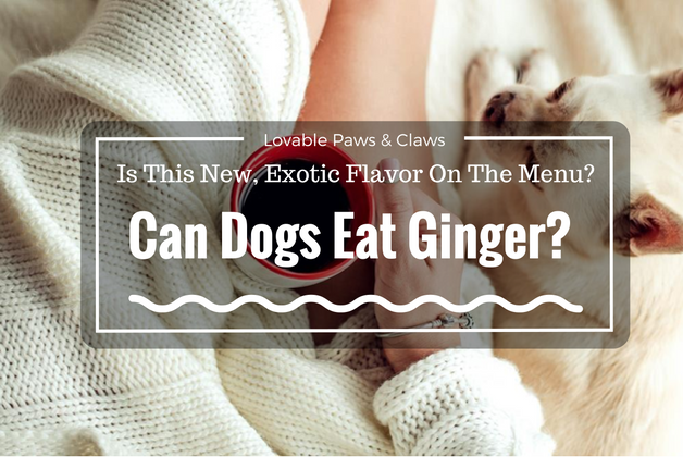 Can Dogs Eat Ginger? Is This New, Exotic Flavor On The Menu?