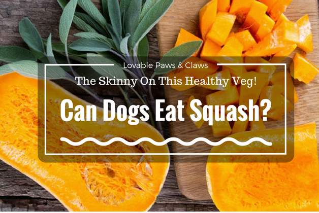 Can Dogs Eat Squash? The Skinny On This Healthy Veg!