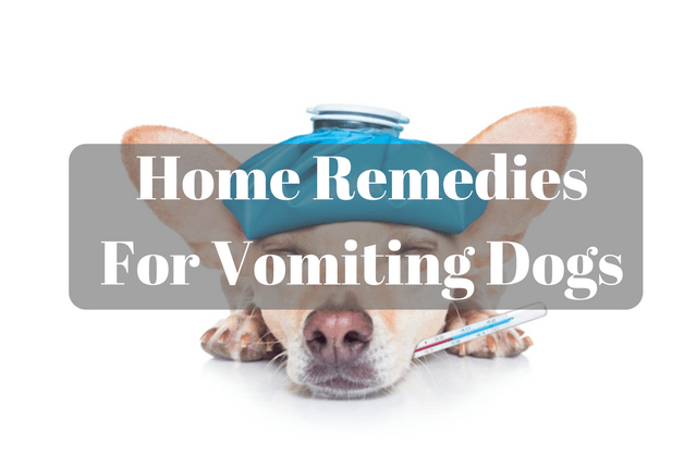 How To Help Your Sick Dog: Home Remedies For Vomiting Dogs