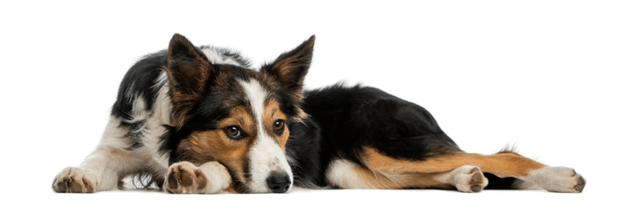 What You Need To Know About Your Vomiting Dog