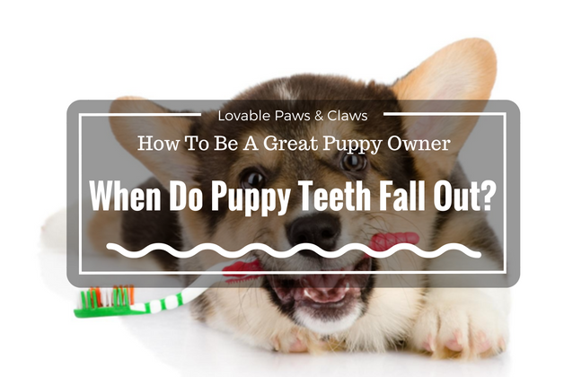How To Be A Great Puppy Owner: When Do Puppy Teeth Fall Out?