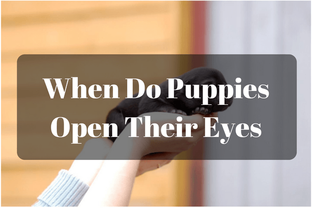 When Do Puppies Open Their Eyes