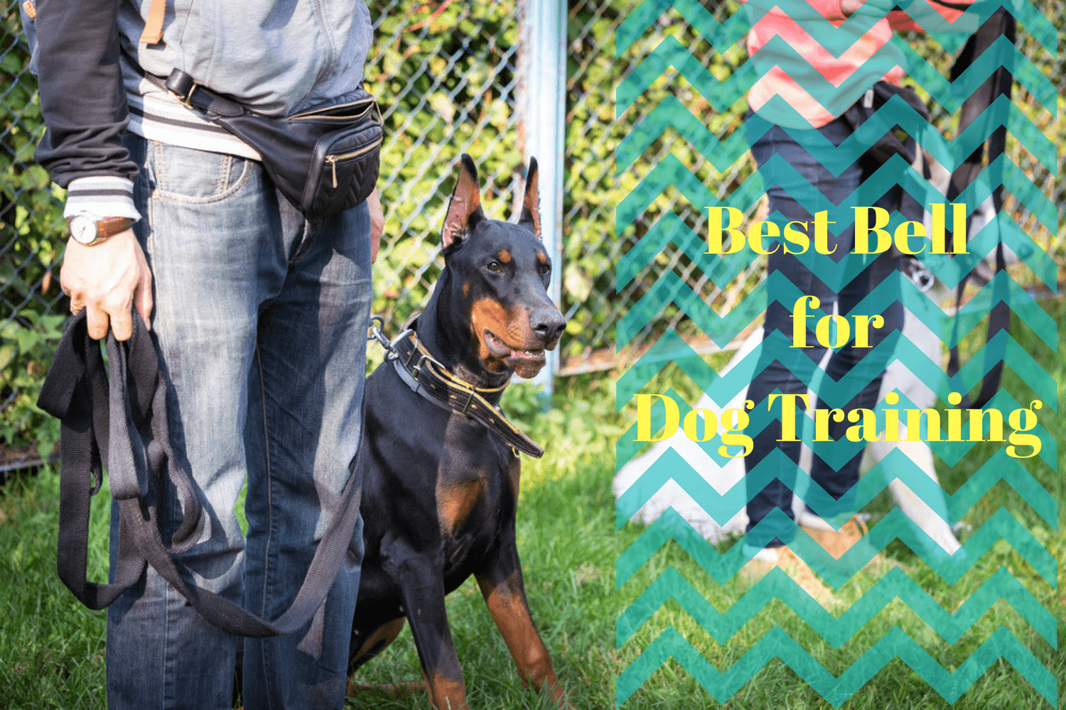 Guide to the Best Bell for Dog Training in 2019