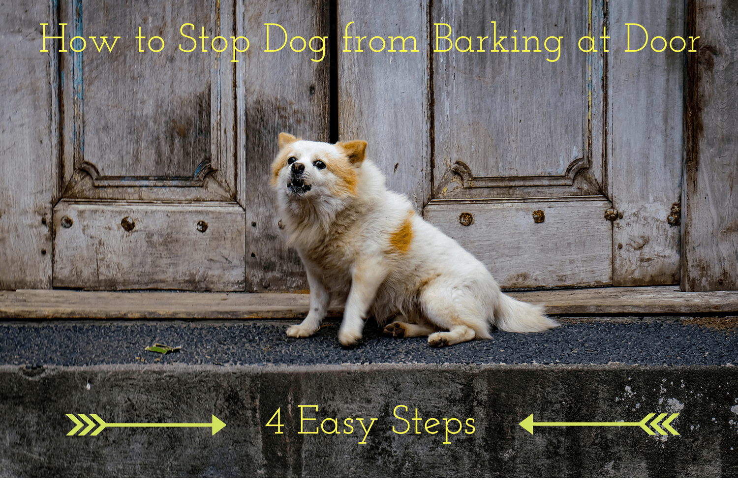 How to Stop Dog from Barking at Door in 4 Easy Steps