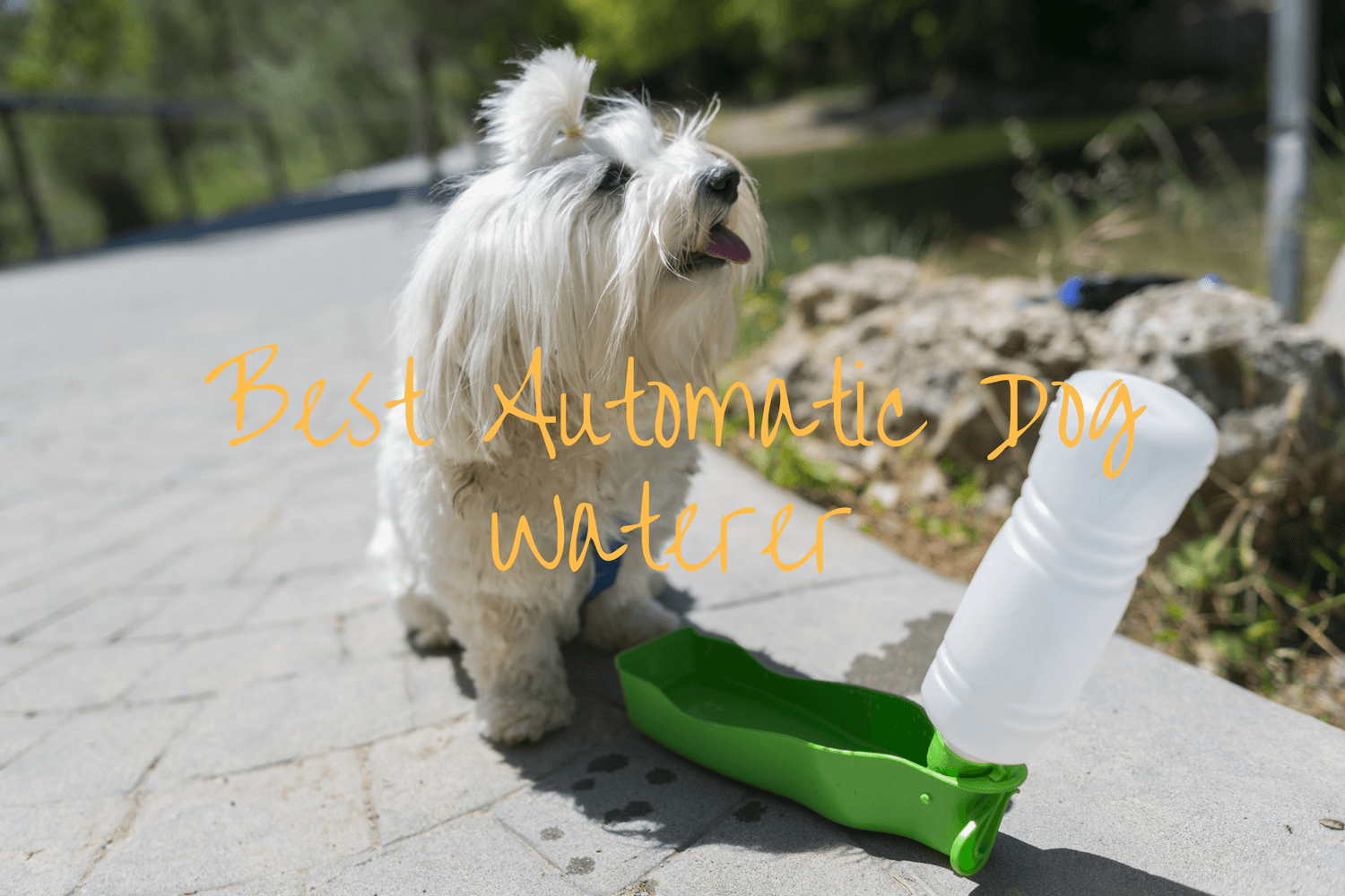 Best Automatic Dog Waterer Reviews to Look Out For