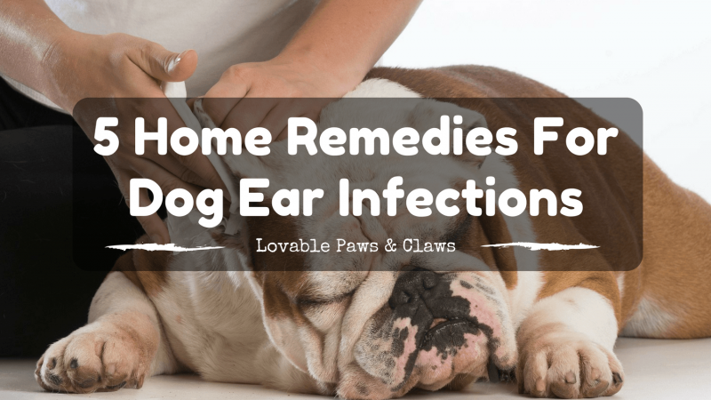 5 Home Remedies For Dog Ear Infections