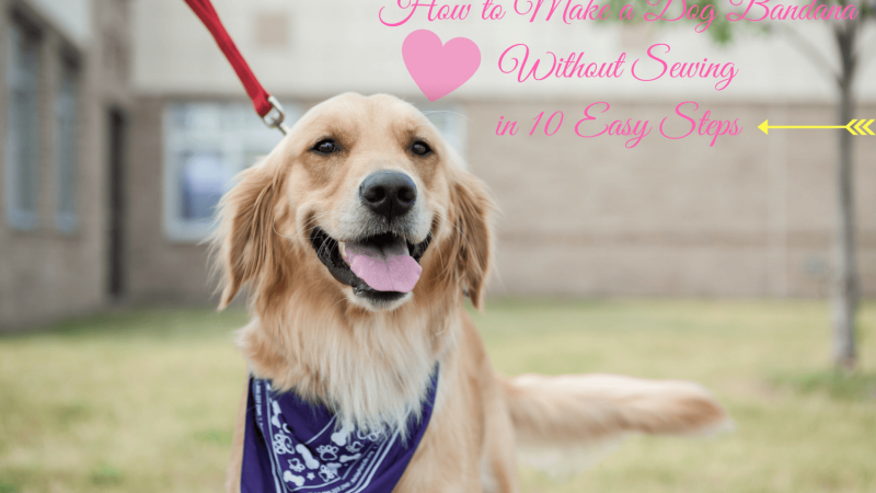How to Make a Dog Bandana Without Sewing in 10 Easy Steps