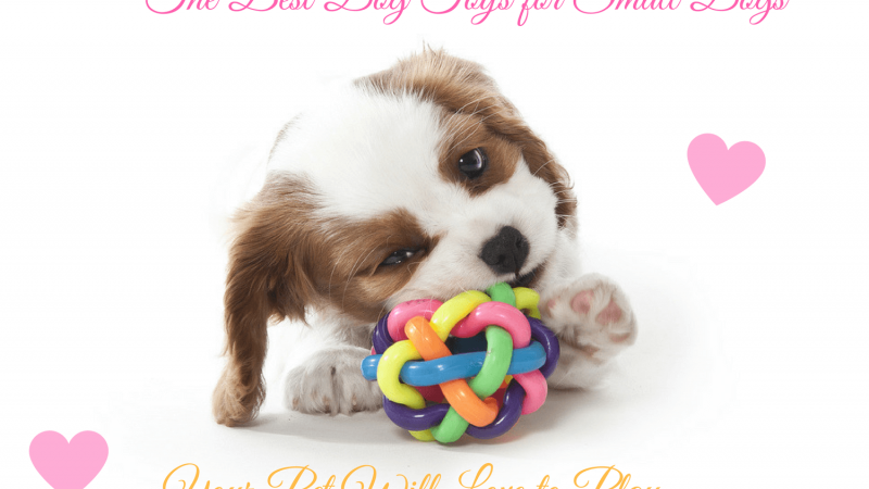 The Best Dog Toys for Small Dogs Your Pet Will Love to Play