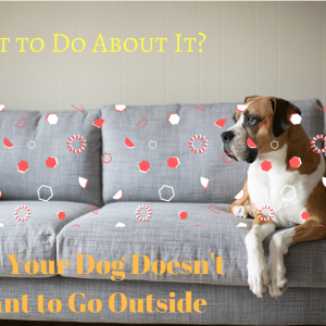 Why Your Dog Doesn't Want to Go Outside and what to Do About It?